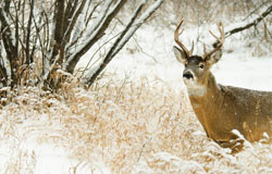 Go after that trophy buck on your next hunting retreat.